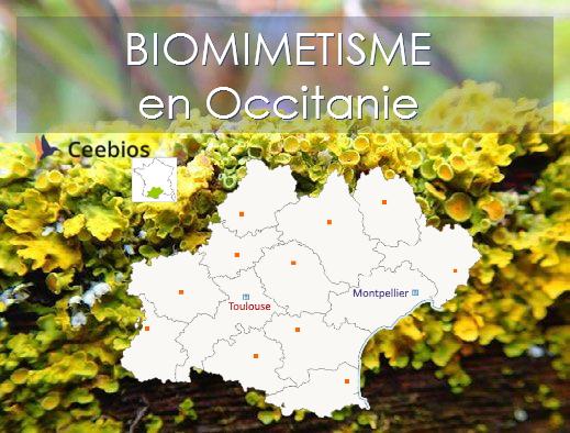 Biomimétisme en Occitanie - Illustrations